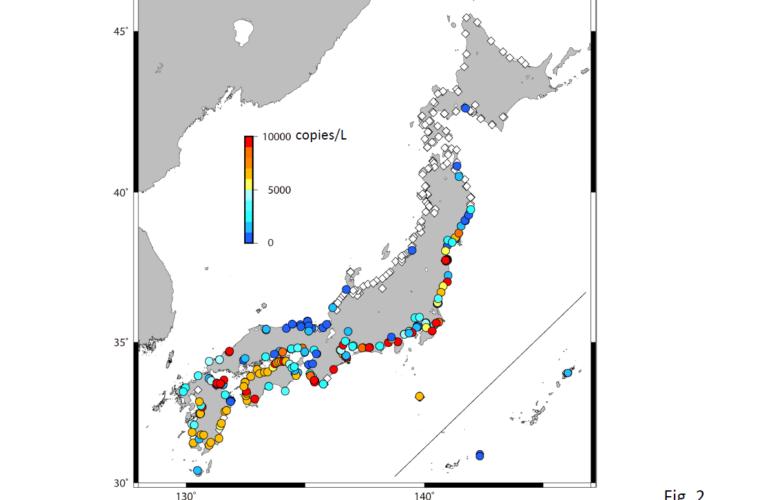 絶滅危惧種のニホンウナギ、分布域が明らかに