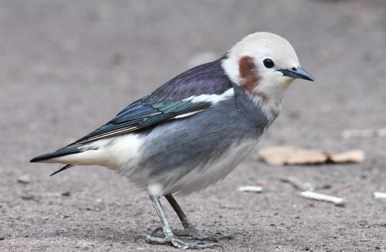 サークル寄稿企画 北大サークルラボ 【第1回】北大野鳥研究会